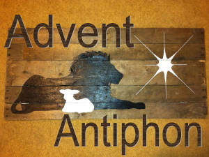Advent Antiphon